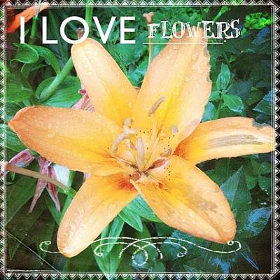 Lilies Photograph - Ok. Having Too Much Fun With New #app by Teresa Mucha
