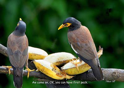 Common Myna Photograph - Ok You Can Have First Peck by Donald Rumsey