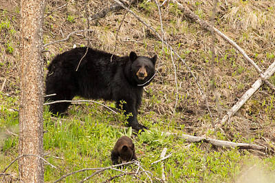 Bear Photograph - Okay You Found Us by Natural Focal Point Photography