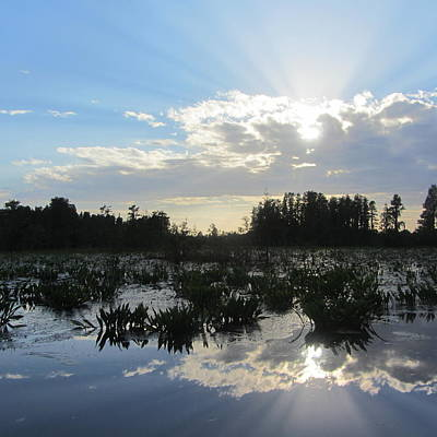 Lily Pads Photograph - Okefenokee Swamp 11 by Cathy Lindsey