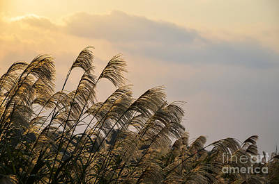 Photograph - Okinawan Grass Landscape by Kennerth and Birgitta Kullman