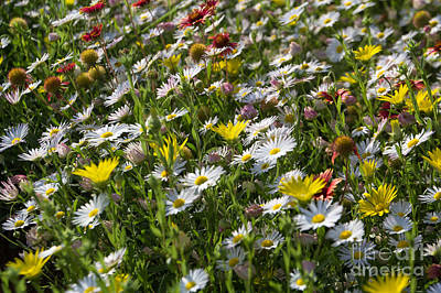 Photograph - Oklahoma Wildflowers 2 by Jim McCain