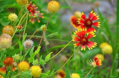 Oklahoma Wildflowers Art Print