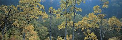 Leaves Changing Photograph - Okushiga Kogen Nagano Japan by Panoramic Images