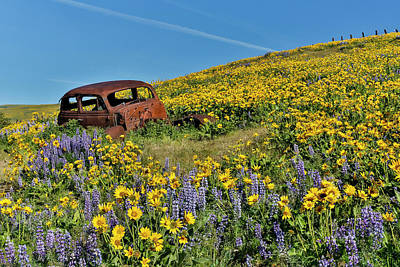 Arrow-leaf Balsamroot Photograph - Old Abandoned Car, Springtime Bloom by Darrell Gulin