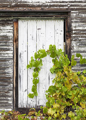 Photograph - Old Barn Door by Alan L Graham