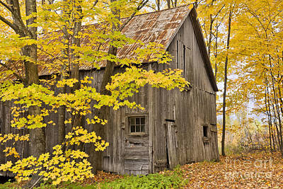 Photograph - Old Barn In Fall Woods by Alan L Graham