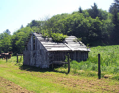 Photograph - Old Barn With Horses In Back by Lucie Buchert