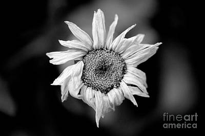 Photograph - Old Beauty by Michael Arend