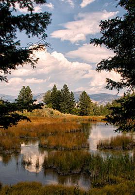 Photograph - Old Beaver Ponds by Linda Shannon Morgan