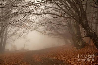 Old Beech Trees In Fog Art Print by Jivko Nakev