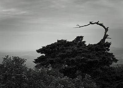 Photograph - Old Bent Tree by Richard Smith