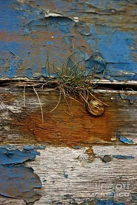 Photograph - Old Boat - Peeling Paint by Liz  Alderdice