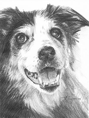 Drawing - Old Border Collie Dog Pencil Portrait by Mike Theuer