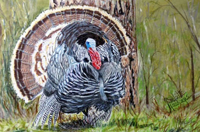 Wild Turkey Drawing - Old Boss Gobbler by Charlotte Hastings