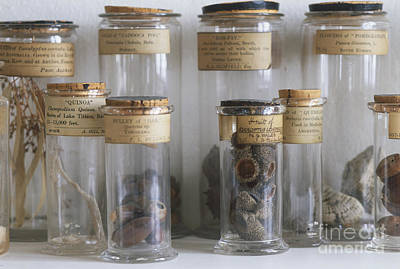 Photograph - Old Botanial Specimens by Pia Tryde Dorling Kindersley