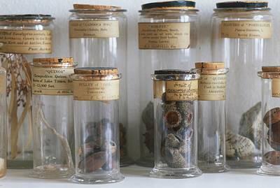 Found-object Photograph - Old Botanical Specimen Jars by Dorling Kindersley/uig
