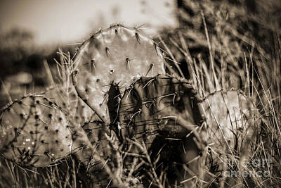 Photograph - Old Cactus by Amber Kresge