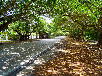Banyan Tree Photograph - Old Cutler by Carey Chen
