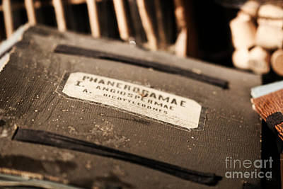 Handmade Book Photograph - Old Documents II by Four Hands Art