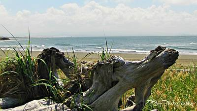 Photograph - Old Driftwood by Deahn      Benware