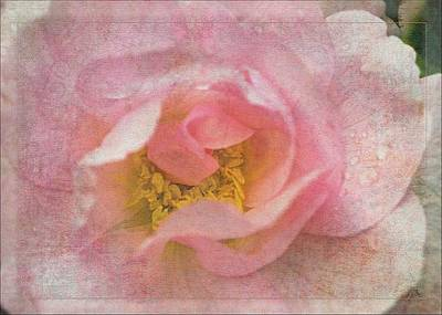Old English Rose Art Print