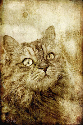 Photograph - Old Fashion Cat by Raffaella Lunelli