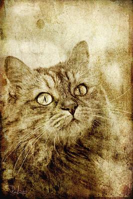 Photograph - Old Fashion Cat by Raffaella Lunelli