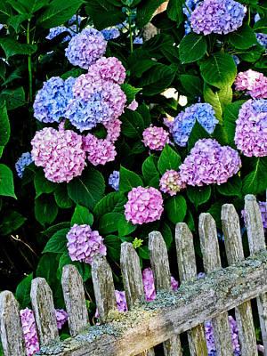 Split Rail Fence Photograph - Old Fashioned Cape Cod by Sandy Dimke
