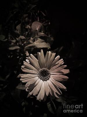 Photograph - Old Fashioned Flower by Tim Good