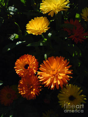Old-fashioned Marigolds Art Print by Martin Howard