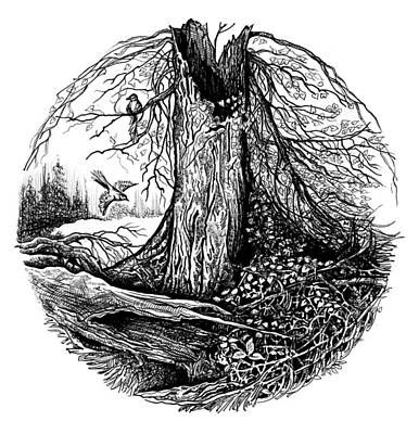 Old Forest Art Print