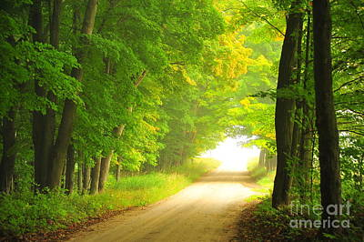Old Forest Road In Autumn Print by Terri Gostola