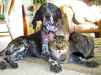 Photograph - Old Friends Cat N Dog by Michele Avanti