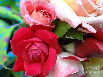 Roses Photograph - Old Garden Roses by Diane DiMarco