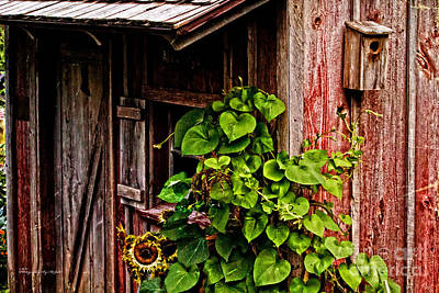 Photograph - Old Garden Shed by Ms Judi