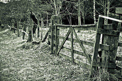 White Cattle Photograph - Old Gate by Tom Gowanlock