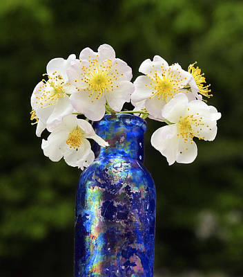 Photograph - Old Glass New Roses by Lara Ellis