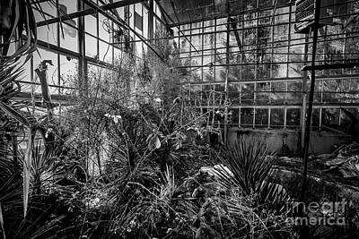 Photograph - Old Greenhouse One by Ken Frischkorn