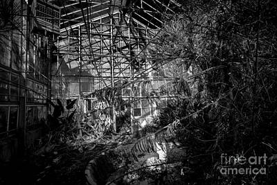 Photograph - Old Greenhouse Two by Ken Frischkorn
