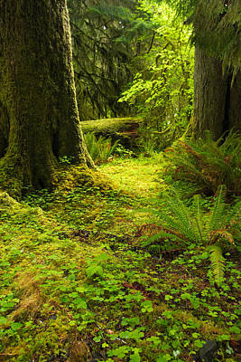Photograph - Old Growth Forest by Byron Jorjorian