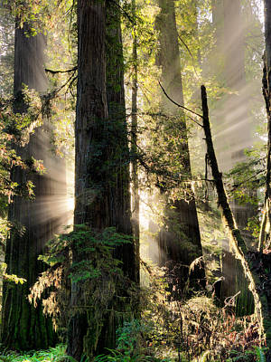 Unique Wall Art Photograph - Old Growth Forest Light by Leland D Howard