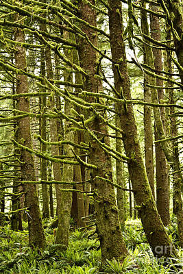Photograph - Old Growth Forest Oregon by Carrie Cranwill