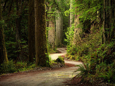 Old Growth Forest Route Art Print by Leland D Howard