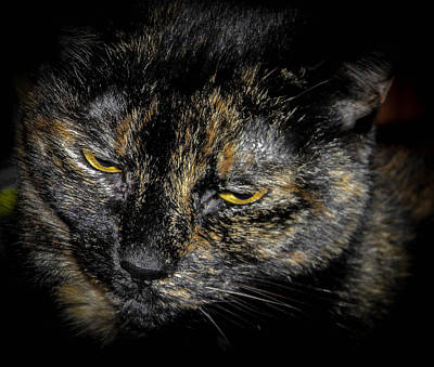 Photograph - Old Grumpy by Christy Usilton