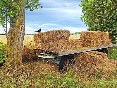 Hay Wagon Photograph - Old Hay Wagon by Gill Billington