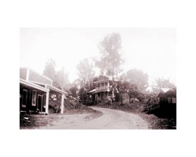 Photograph - Old Holualoa Highway  by Mary Lovein