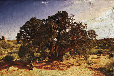 Digital Art - Old Juniper Tree by Sandra Selle Rodriguez