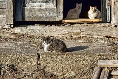 Abandoned Pets Photograph - Old Knox Church Cats #2 by Nikolyn McDonald