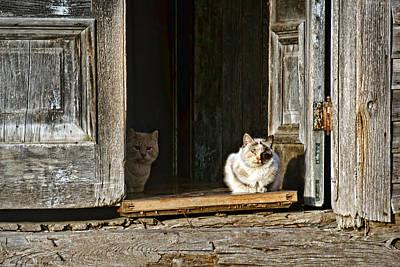 Abandoned Pets Photograph - Old Knox Church Cats by Nikolyn McDonald